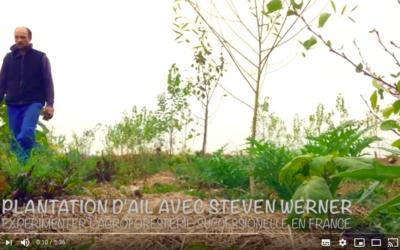 Plantation d'ail en agriculture syntropique – Steven Werner