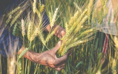 Le vieillissement des agriculteurs, un enjeu planétaire