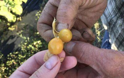 Repenser le métier d'agriculteur