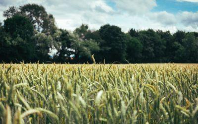 La Magie de l'Agroforesterie