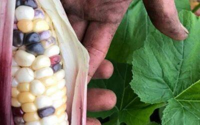 La conversion à l'agriculture biologique, une solution pour stocker du carbone