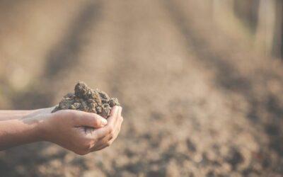 Comment juge-t-on de la qualité d'un sol ?