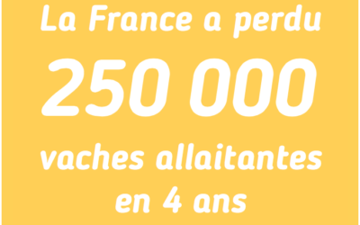 La France a perdu 250 000 vaches allaitantes en 4 ans