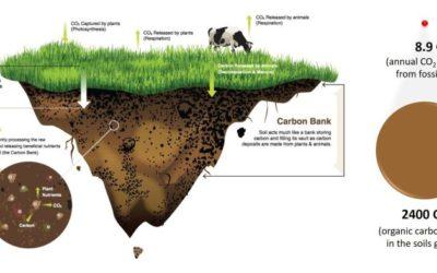 Certaines initiatives commencent à rémunérer la captation du carbone dans les sols en agriculture