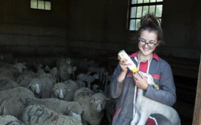 Faciliter les installations en élevage ovin
